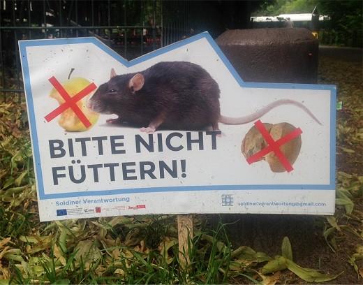 Rattenschild_(c)_Andreas_Küenle