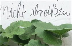 Graffito_Teaser_(c)_Eberhard_Kehrer