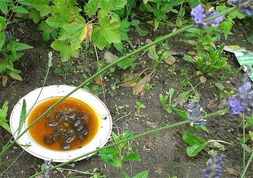 Schnecken_Lavendel_Suppe_(c_Kay_Sokolowsky
